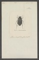 Leuretra - Print - Iconographia Zoologica - Special Collections University of Amsterdam - UBAINV0274 020 10 0012.tif