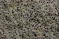 Lichen (25757612197).jpg