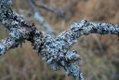 Lichen (xndr).jpg