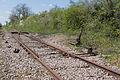 Ligne de Bourron-Marlotte à Malesherbes - 2013-04-21 - IMG 9347.jpg