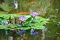 Lillies and Koi (3002853042).jpg