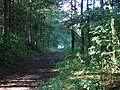 Links Wood. - geograph.org.uk - 58852.jpg