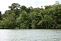 Livingstone, Rio Dulce - panoramio.jpg