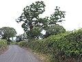 Llanllechid, UK - panoramio (163).jpg