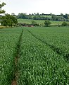 Long tramlines in wheat near Napton - geograph.org.uk - 1325455.jpg