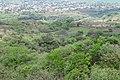 Los Guachis Circle 6 above.jpg