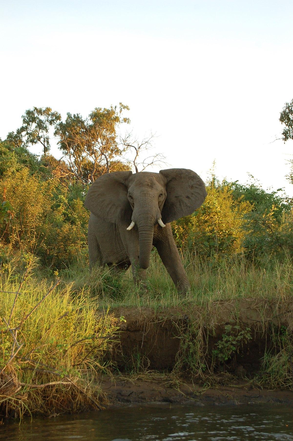 Lower Zambezi National Park - Wikipedia