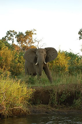 Lower Zambezi, Zambia (2518067857).jpg