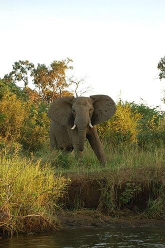 Lower Zambezi National Park - Image: Lower Zambezi, Zambia (2518067857)