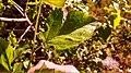 Ludington, MI 49431, USA - panoramio (7).jpg