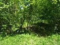 MD.RS - rezervația naturală silvică Stînca - apr 2018 - 07.jpg