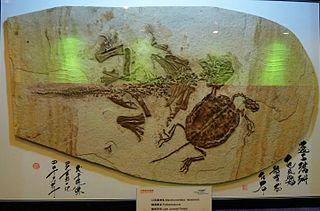 Paleobiota of the Yixian Formation