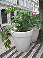 Madeira em Abril de 2011 IMG 1704 (5663736484).jpg