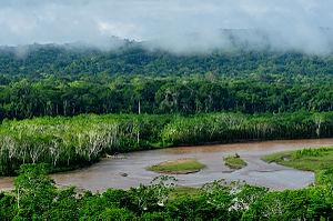 Madidi Nationalpark Amazonas Bolivien