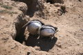 Magellanic penguin3.jpg