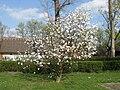 Magnolia Toruń2.jpg
