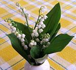 Un bouquet de muguet, offert le 1er mai.