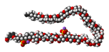 Space-filling model of the maitotoxin molecule