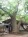 Malindi, Kenya 08.JPG