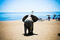 Marbella (5635759002).jpg