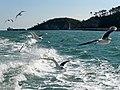 Matsushima Bay 松島灣 - panoramio (8).jpg