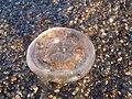 Medusa - panoramio.jpg