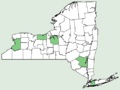 Mentha × rotundifolia NY-dist-map.png