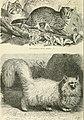 Meyers Konversations-Lexikon - eine Encyklopädie des allgemeinen Wissens (1890) (14577569938).jpg