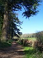 Mid Devon , Knightshayes - Footpath - geograph.org.uk - 1271925.jpg