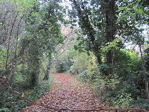 Mill Hill Old Railway Nature Reserve - Image: Mill Hill Old Railway 2