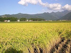 Minamiuonuma - Paddy fields in Minamiuonuma