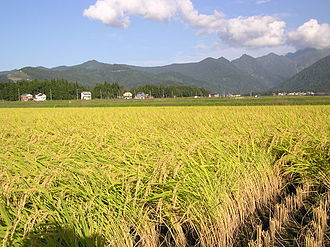 Minamiuonuma - Paddy fields in Minamiuonuma