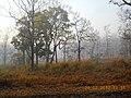 Misty Morning @ Wayanad Wildlife Sanctuary, Muthanga Range - panoramio (4).jpg