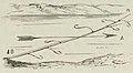 Montpetit - Poissons d'eau douce du Canada, 1897 (page 419 crop) fig 124.jpg