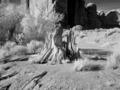Monument Valley, Arizona LCCN2010630326.tif
