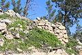Mount Eitan IMG 2675.JPG