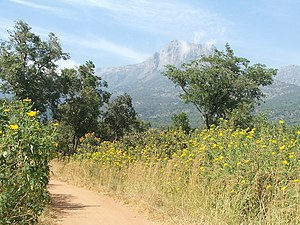 Mulanje Massif - Mount Mulanje in the distance, seen from a pathway.