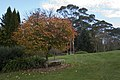 Mount Wilson NSW 2786, Australia - panoramio (83).jpg