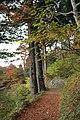 Mt.mitake 2010-11-18.JPG