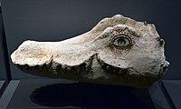 Mummy mask Crocodile München 25102016.jpg