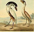 Musei Leveriani explicatio, anglica et latina (1792) (14747534424).jpg