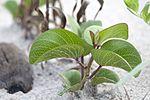 NASA Kennedy Wildlife - Plant sprout.jpg