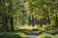 NSG Rotwildpark Stuttgart 2014 06 Wald.jpg