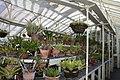National Botanic Garden,Dublin,Ireland - panoramio (42).jpg