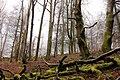 Nationalpark Hunsrück-Hochwald 4.jpg