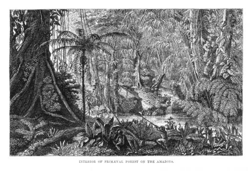 el naturalista en el rio amazonas