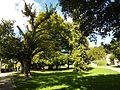 """Naturdenkmal """"Alter Baumbestand"""" Überlingen.jpg"""