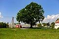 Naturdenkmal 436 Stieleiche.jpg
