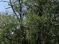 Naturschutzgebiet Heuckenlock 21.05.2014 41.JPG