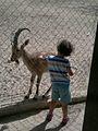Negev Zoo Beersheva Israel IMG 0573a.JPG